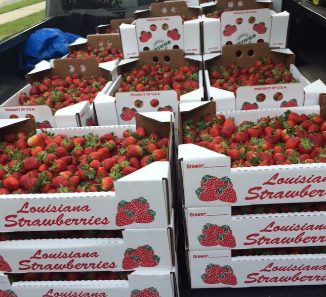 Strawberry Day 2016